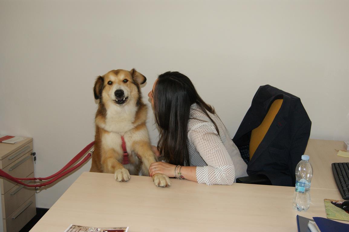 Dogs at work 2017 tutte le novit della nuova edizione for Assicurazione casa generali